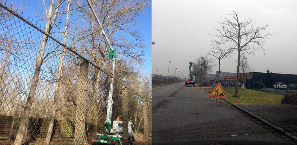 Élagage des arbres - Collectivites et particuliers