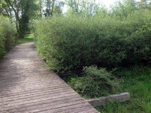 Taille d'arbustes et de haies